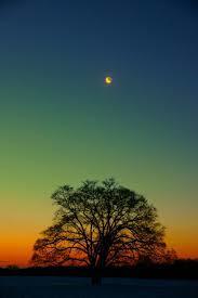 下弦の月.jpg
